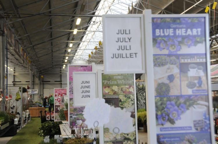 Het doel is dat je heel het verkoopseizoen goede handel op de vloer hebt staan Opstelling met kleine fruitbomen van De Fruithof
