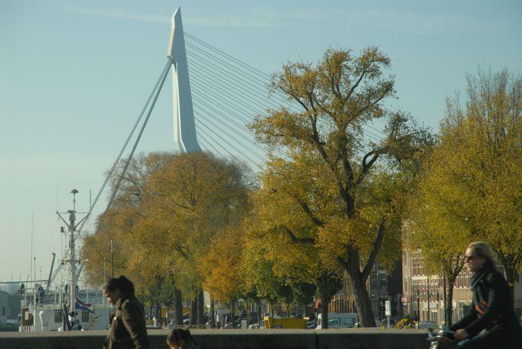 Overal waar mogelijk werden groeiplaatsen verbeterd of goede groeiplaatsen gemaakt, op basis van afspraken met de afdeling Beheer ondergrond over de ligging van kabels en leidingen rond bomen. Op de Prins Hendrikkade staan iepen.