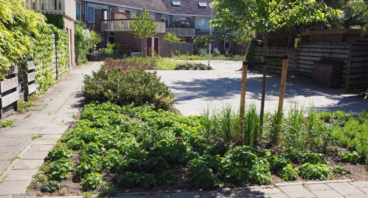 En zo ziet tuin er een paar maanden na de make-over uit. Foto: Kleurrijk Buiten/Verheij Integrale groenzorg