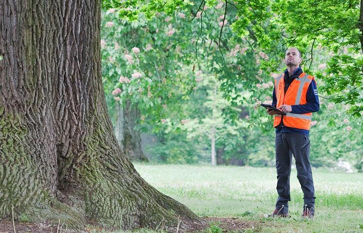 Wouter Schulp van IPC naast een oude boom, een belangrijke vertegenwoordiger van biodiversiteit