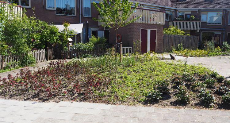 De nieuwe tuin is vele malen kleurrijker dan de oude. Foto: Kleurrijk Buiten/Verheij Integrale groenzorg