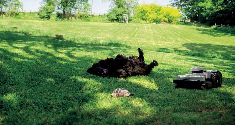 Hond en schildpad veilig voor robotmaaier
